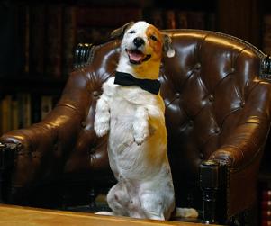 Pancho, El Perro Millonario (Millionaire Dog)